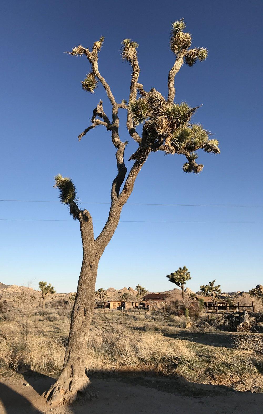 Desert and Denim 2017