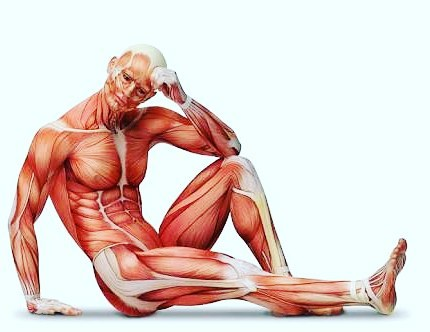 Have you ever thought about what it's like for your muscles? What do they actually do?  Your muscles are responsible for movement. The more you look after them, the better you can move (run, exercise, train).