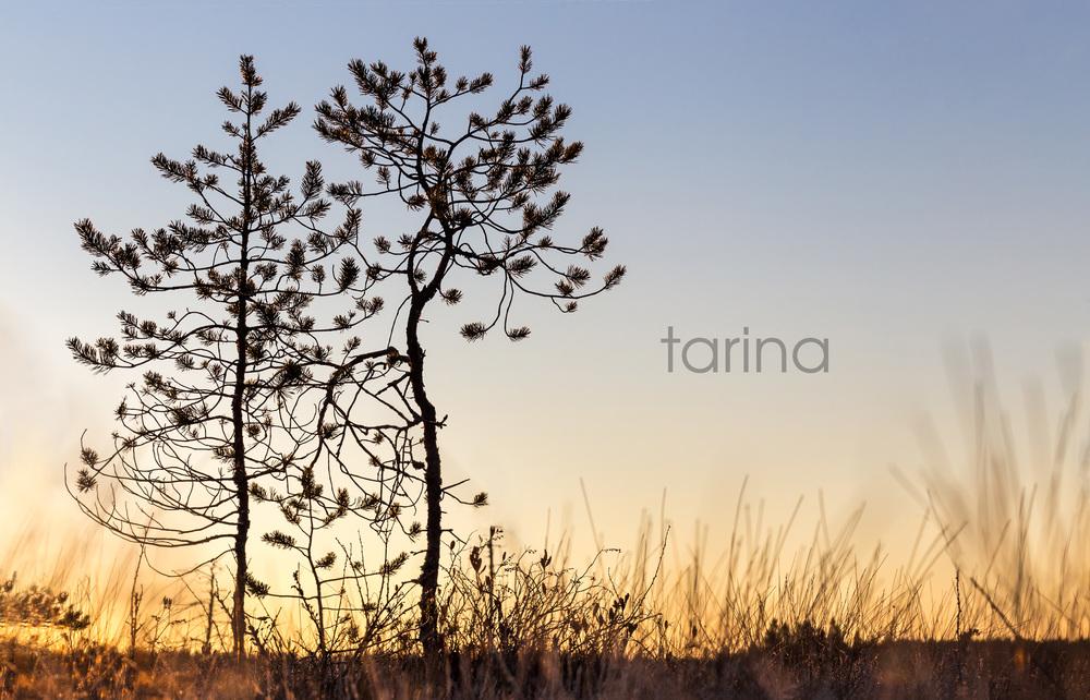 © Tanja Alamikkelä / Stoorila