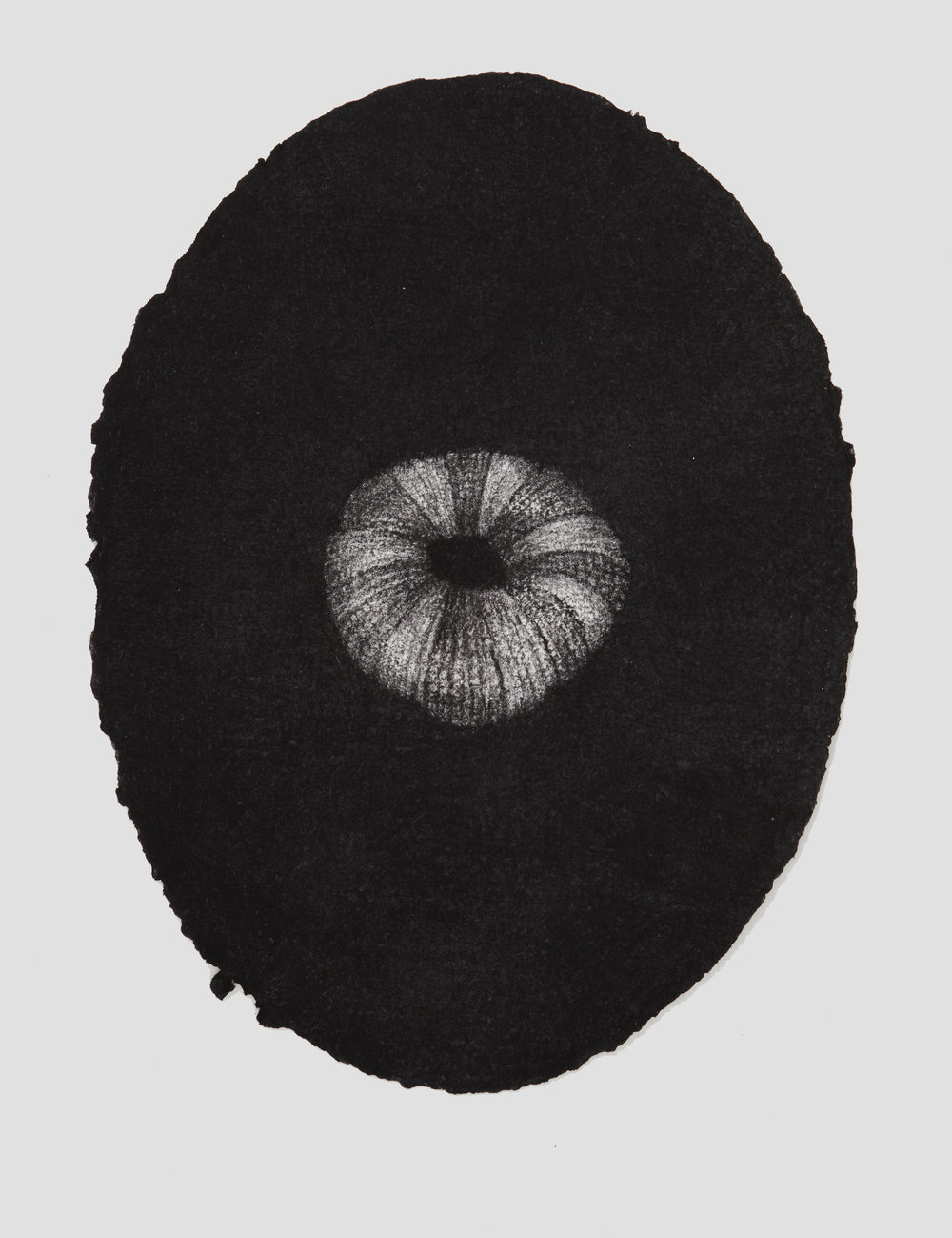 portrait urchin, 2017, 44x33cm, charcoal on paper