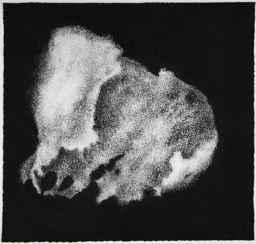 Jennifer Keeler-Milne, 2012, Sea sponge #1, 57x60cm charcoal on paper.jpg