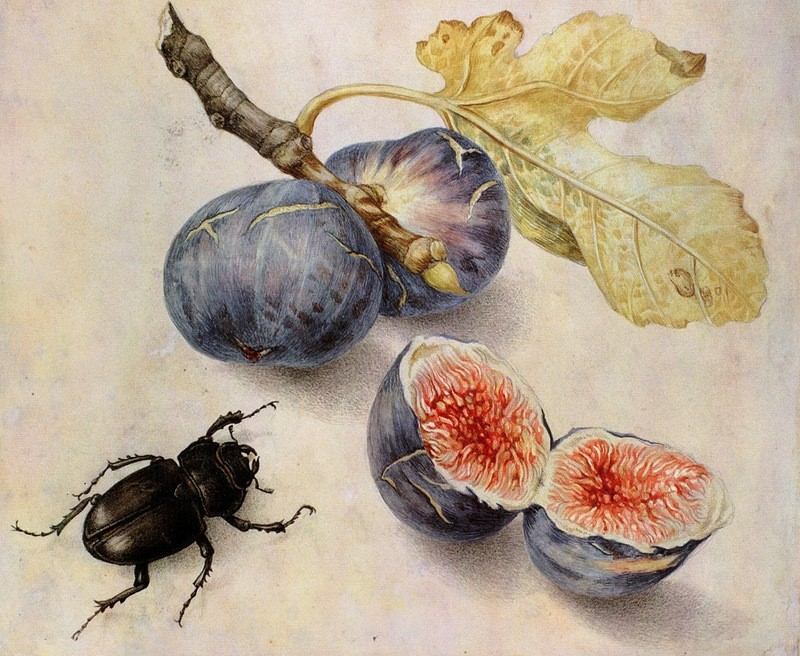 Giovanna Garzoni (1600–1670) Painting of Figs and a Beetle, date unknown
