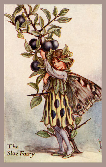 Cicely Mary Barker, The Sloe Fairy, Flower Fairy series c. 1927