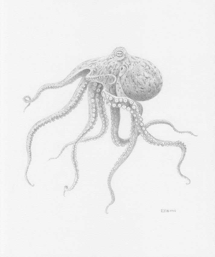 Illustration by  Esther van Hulsen  ( IG: esthervanhulsen ) made with ink extracted from a 95 million year old octopus fossil by paleontologist Jørn Hurum. The piece is exhibited together with the fossil in the Natural History Museum in Oslo, Norway.