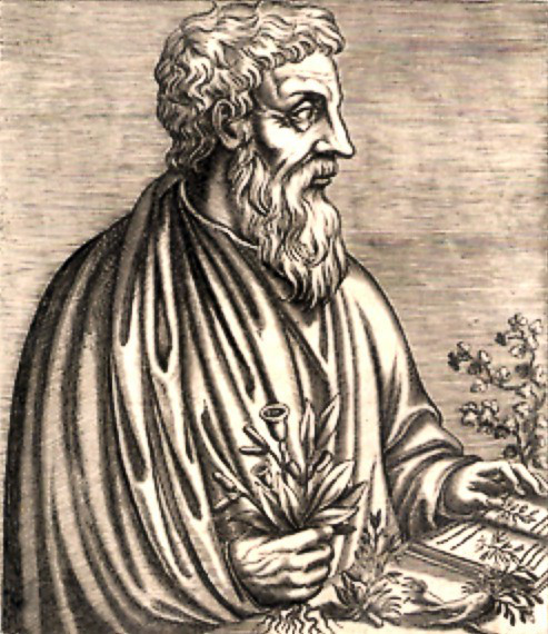 The first written evidence to the healing properties of mastic comes from first-century Greek physician Pedanius Dioscorides in his book De Materia Medica.