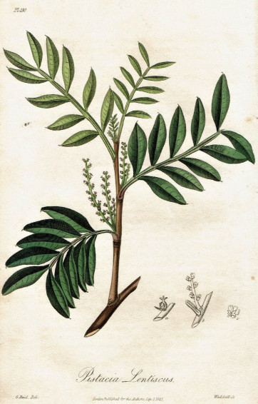 botanical mastica.jpg
