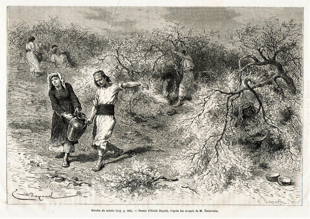 """""""Harvesting mastic. Drawing by Emile Bayard, after M. Testevuide's sketch."""""""