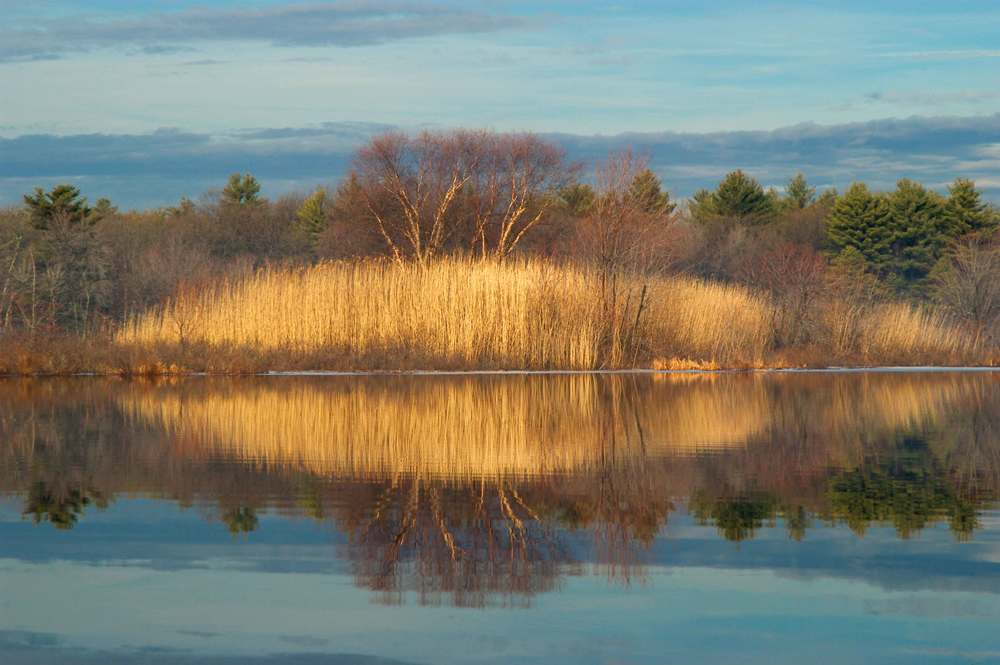 Reeds_concord_riverprint.jpg