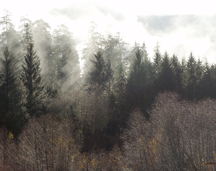 fog_wa2.jpg