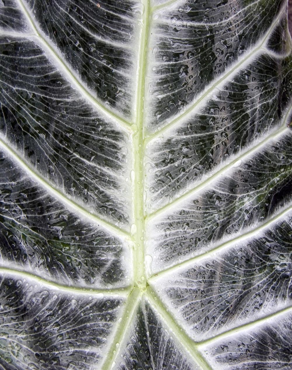 leaf_spine 2_tee.jpg