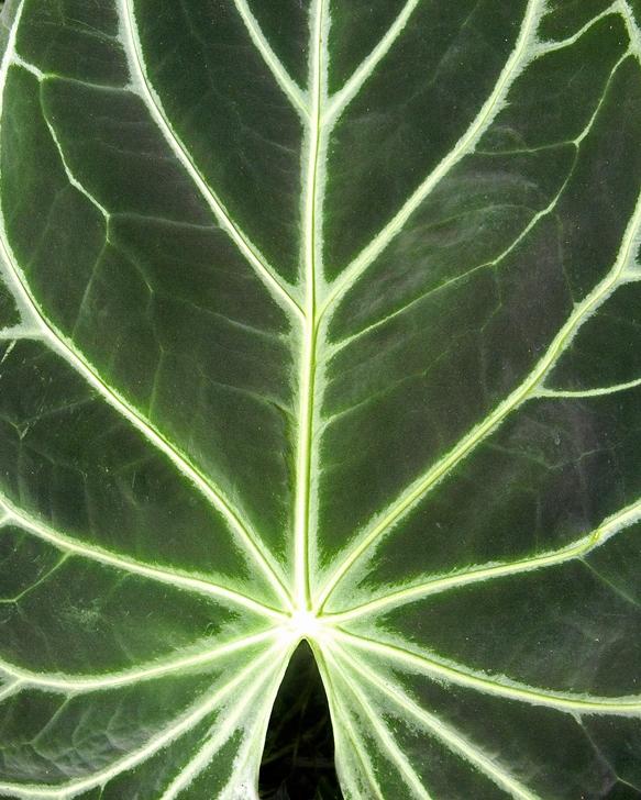 leaf5.jpg