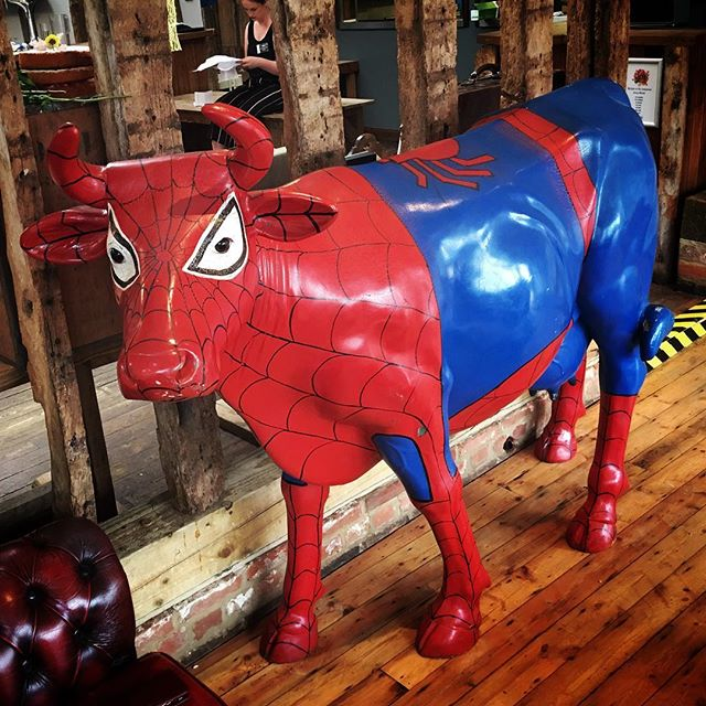 Spider cow, spider cow, spins a web, I don't know how. #spidercow #perfectday #perfectdaymarryoke #marryoke #wedding #weddingmarryoke #jimmysfarm #jimmysfarmwedding #jimmysfarmmarryoke