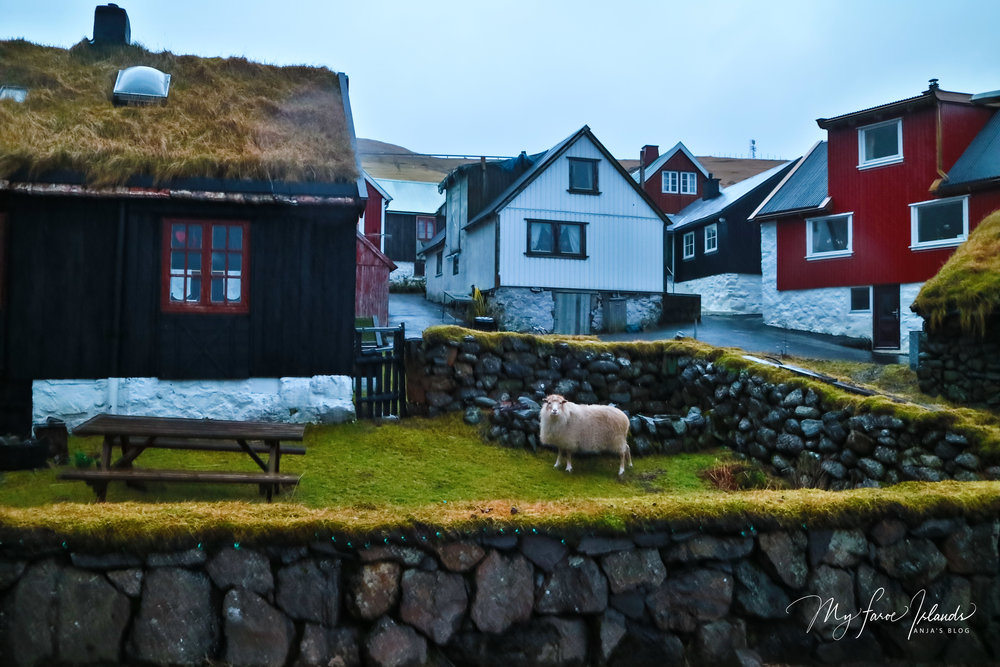Sheep Near Picnic Table © My Faroe Islands, Anja Mazuhn  (1 von 1).jpg