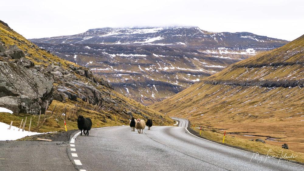 Oyndarfjørður Road ©My Faroe Islands, Anja Mazuhn  (1 von 1).jpg