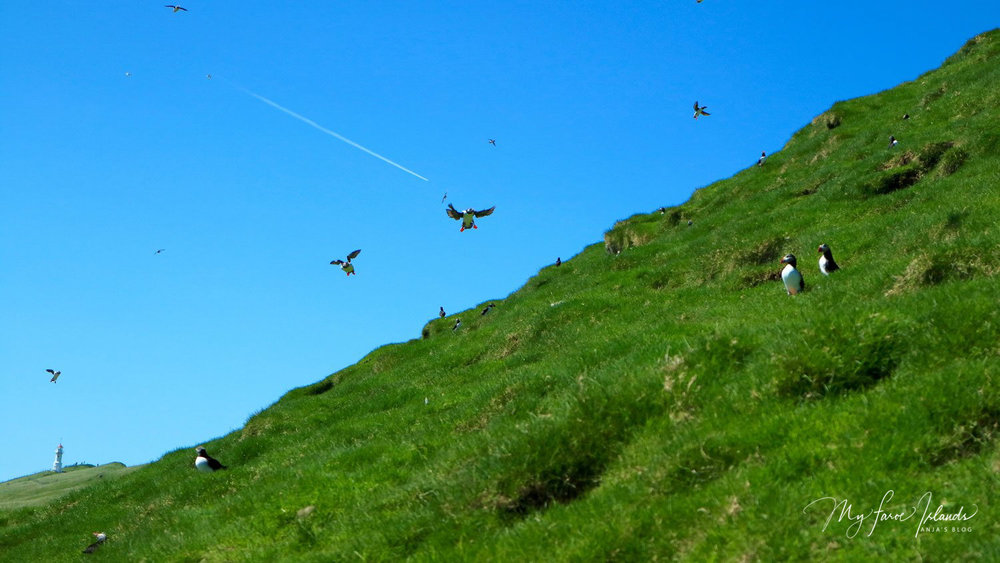 Mykines Taste © My Faroe Islands, Anja Mazuhn  (1 von 1).jpg