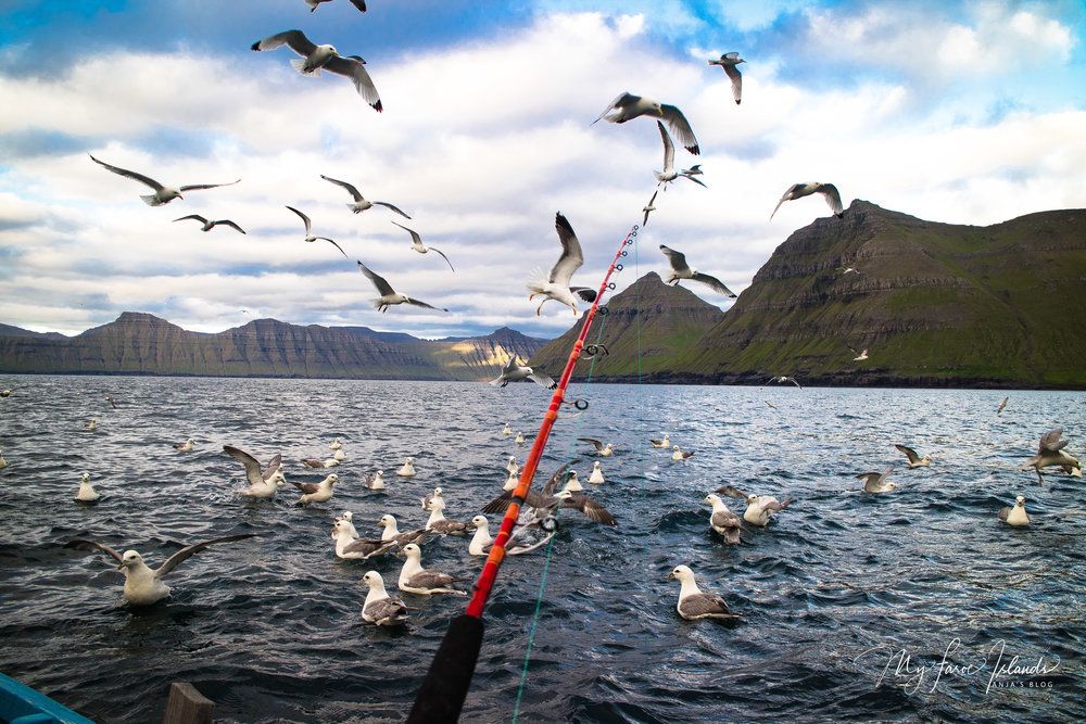 Birds BIG © My Faroe Islands, Anja Mazuhn  (1 von 1).jpg