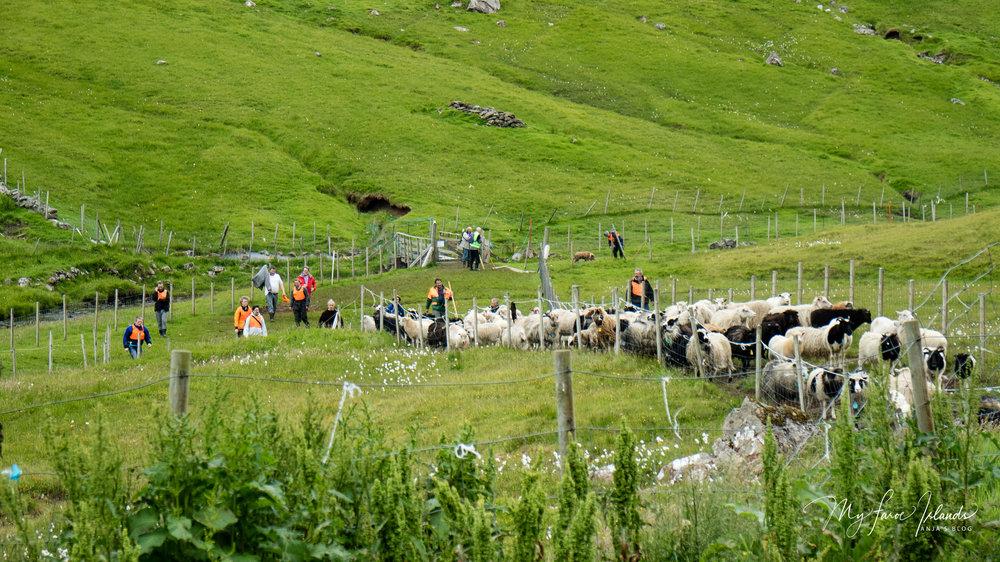 Arrival 2 © My Faroe Islands, Anja Mazuhn  (1 von 1).jpg