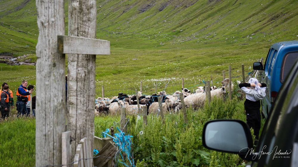 Arrival © My Faroe Islands, Anja Mazuhn  (1 von 1).jpg
