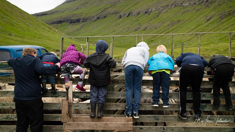 Kids 1 © My Faroe Islands, Anja Mazuhn  (1 von 1).jpg