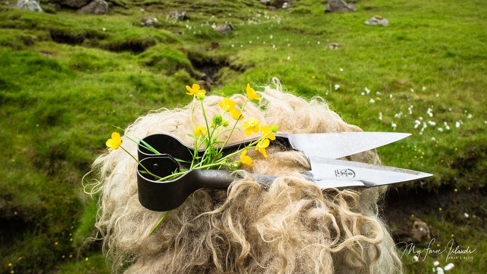 Blade Shears 9 © My Faroe Islands, Anja Mazuhn  (1 von 1).jpg