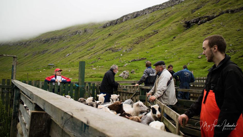 Finish © My Faroe Islands, Anja Mazuhn  (1 von 1).jpg