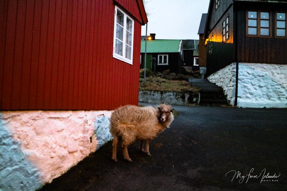Sheep Wall Village 5 ©My Faroe Islands, Anja Mazuhn  (1 von 1).jpg
