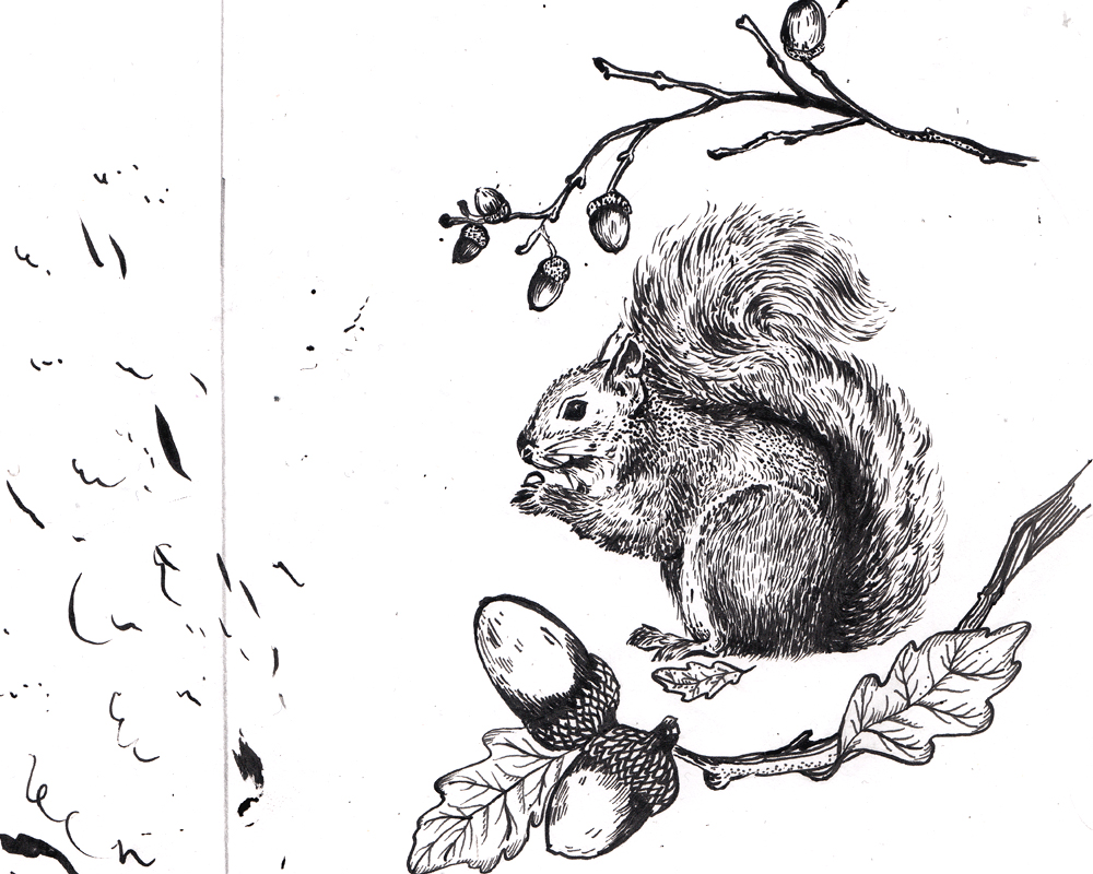 squirrel_sketch