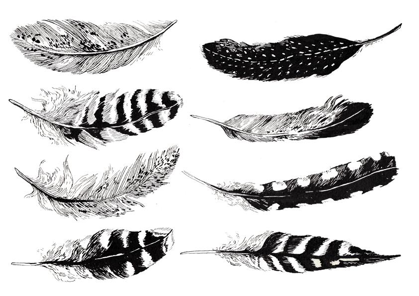 lark-feathers