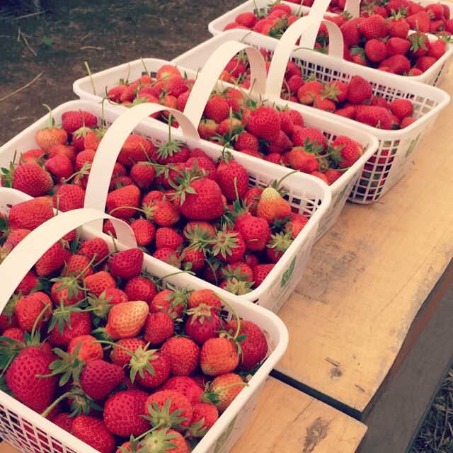 Went  strawberry picking !