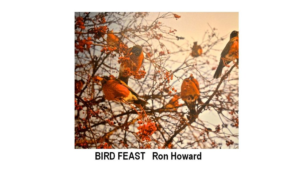 11_BIRD FEAST-Ron Howard.JPG