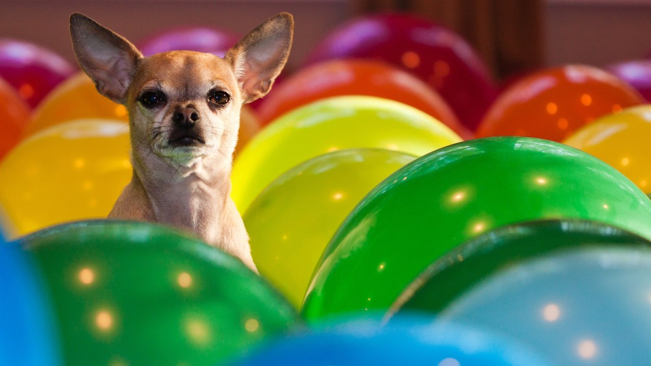 party-dog-balloons