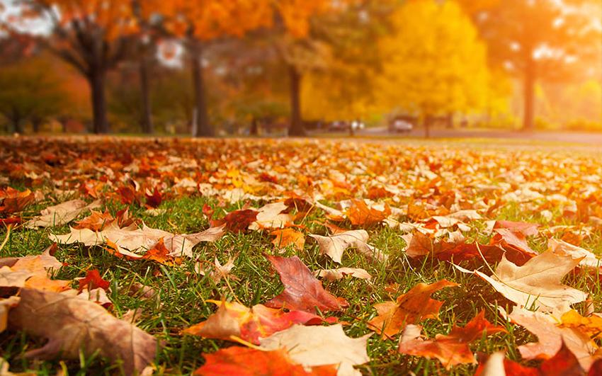 fall clean_2.jpg