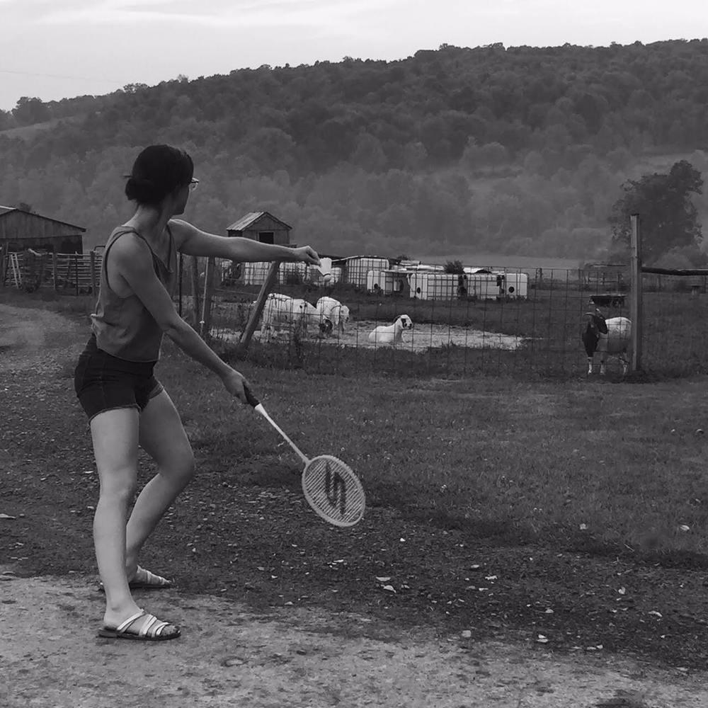 b&w goats badminton2.jpg