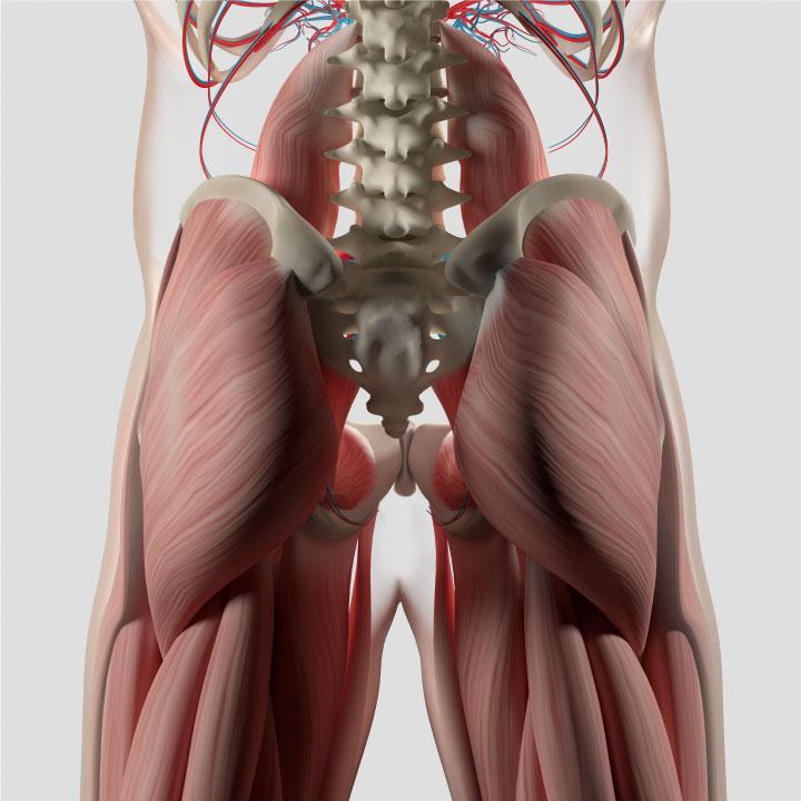Posterior Chain Massage Hope Therapeutic Sports Prenatal