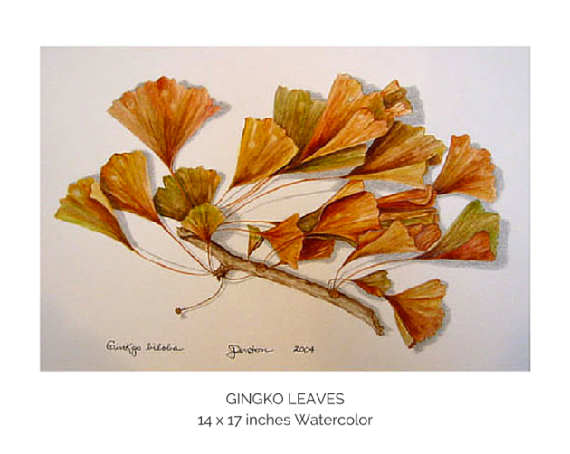 Gingko Leaves.png