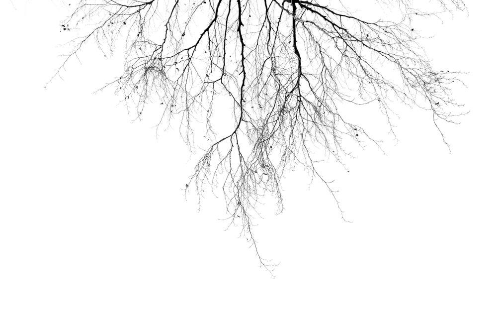 AbstractBW_MuditaAeron_1.jpg