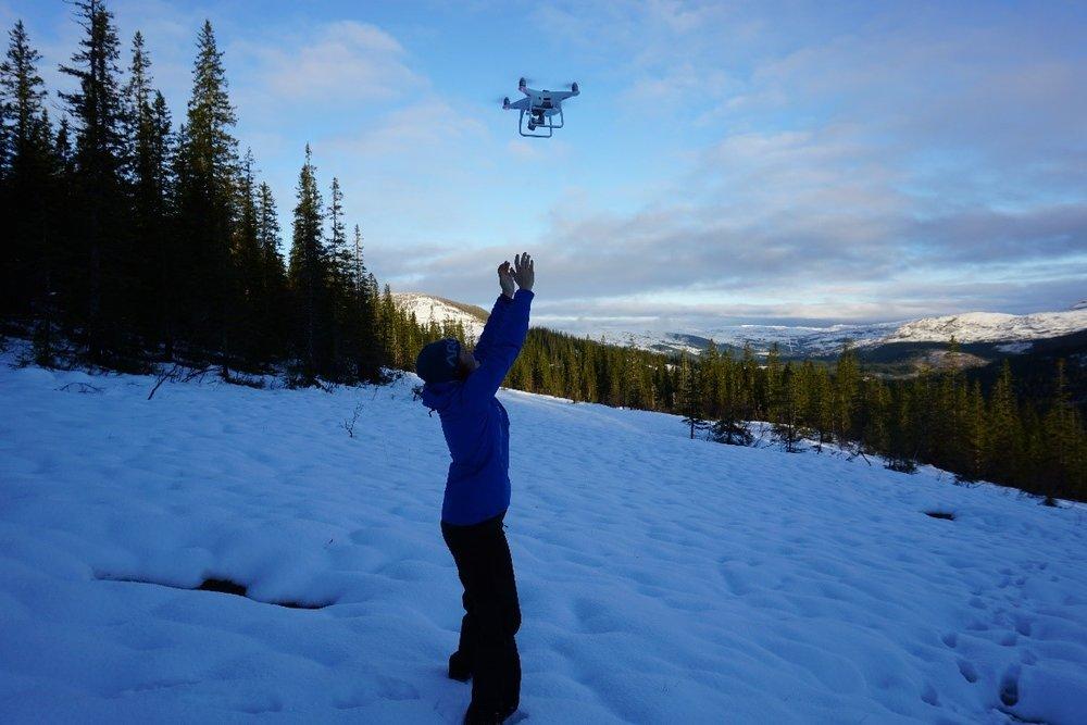 Bruk av drone for å generere terrengmodell langs Angermobekken, Helgeland Sør