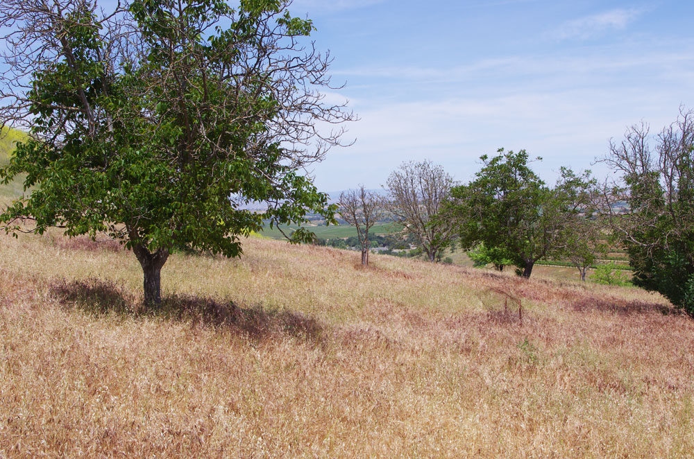 Ours at Last - 10 acres of land in the wine country of Paso Robles.