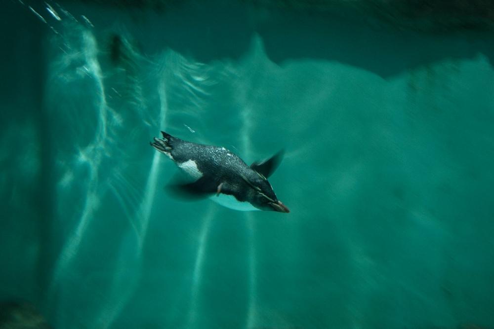 1_003_pinguin_steh_v2.jpg