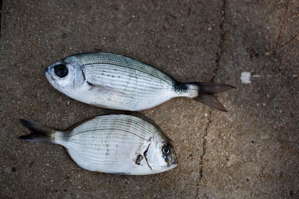 1_012_fish_steh_v2.jpg