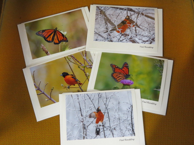 Colourful Art Cards from Paul Roedding Photography featuring our favourite colour of the season!!
