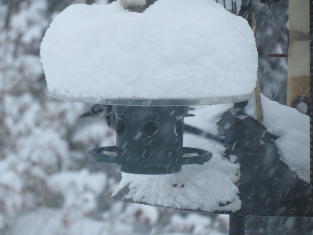 "Blue Jay on this snowy Saturday....certainly enjoying the protection of the Squirrel Buster ""Weather Guard"".!!"