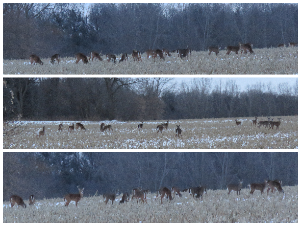 deer jan 31 18.png