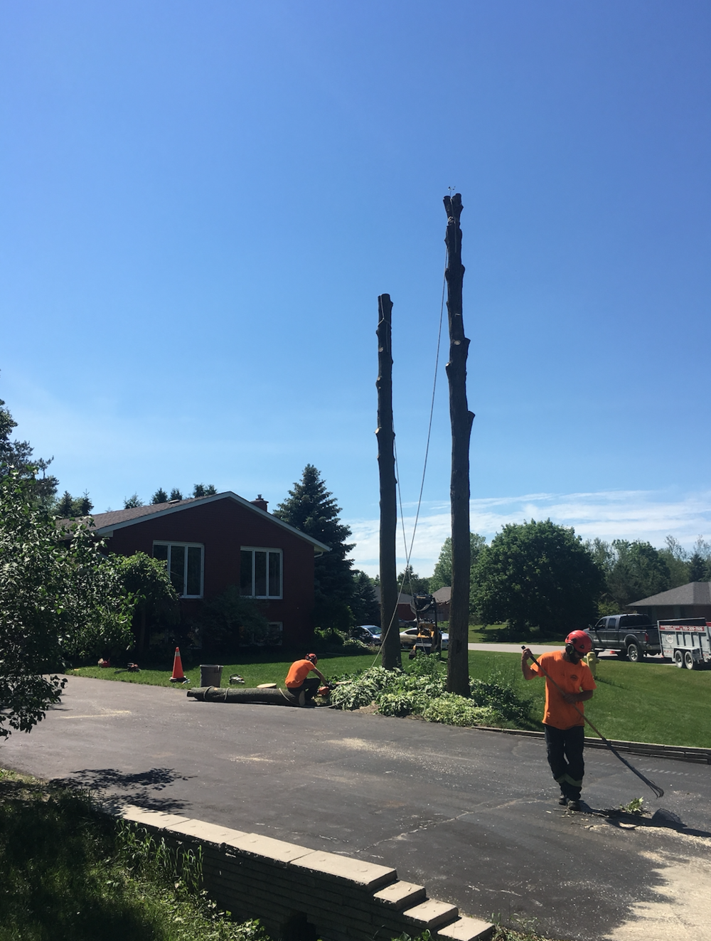 Tree Removal Snowvalley