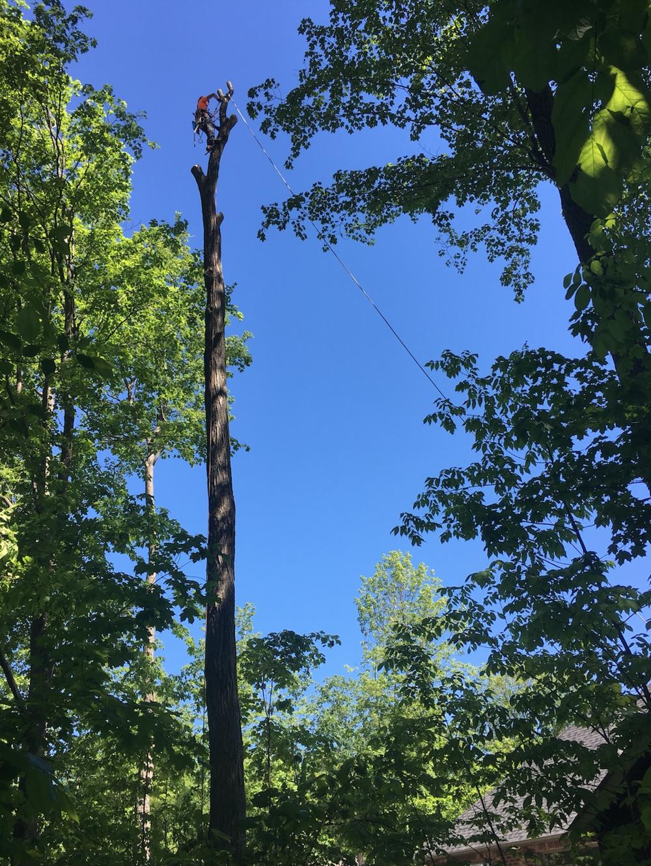Tree Removal Barrie Arborist