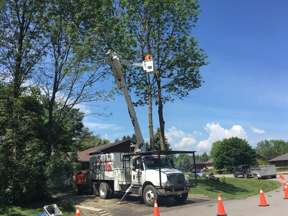 Tree Removal Minesing