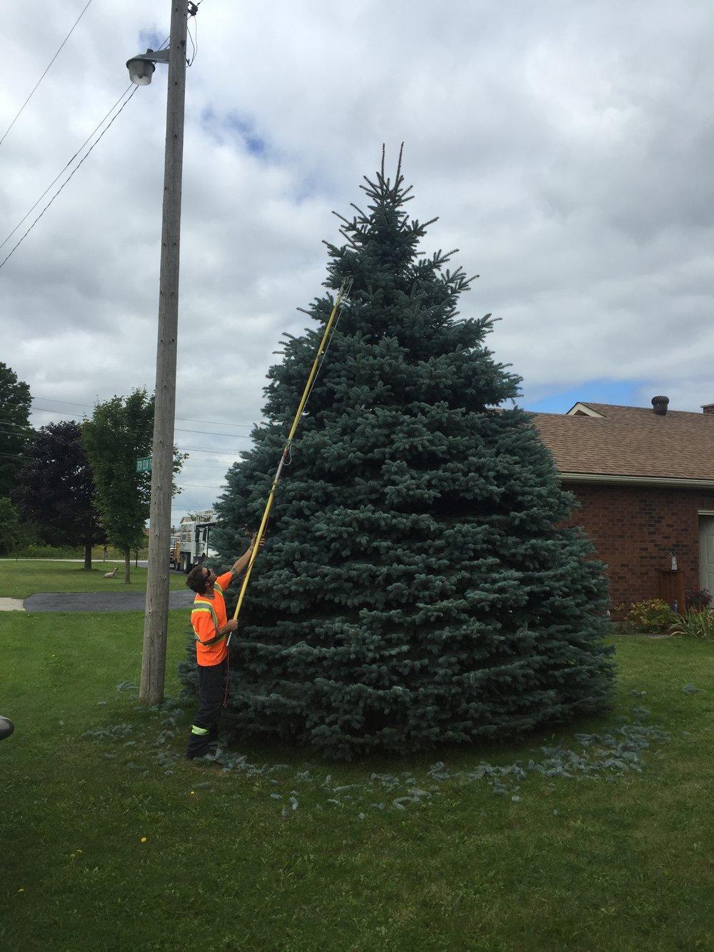 Tree Pruning Midhurst