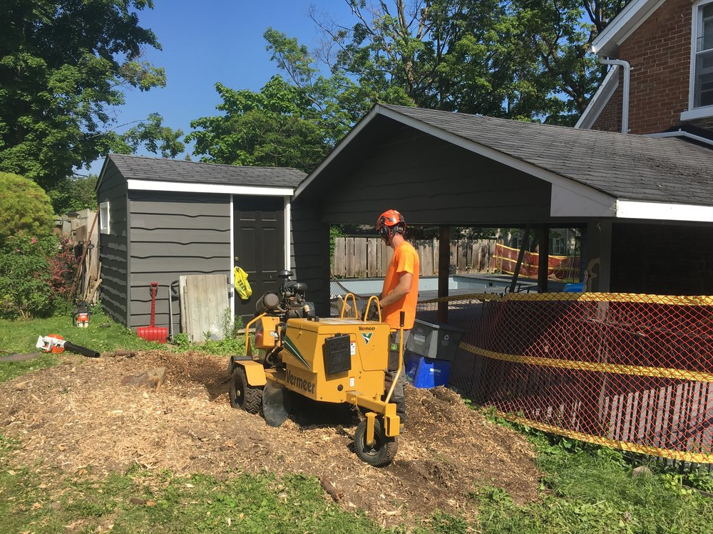 Stump Grinding Shanty Bay
