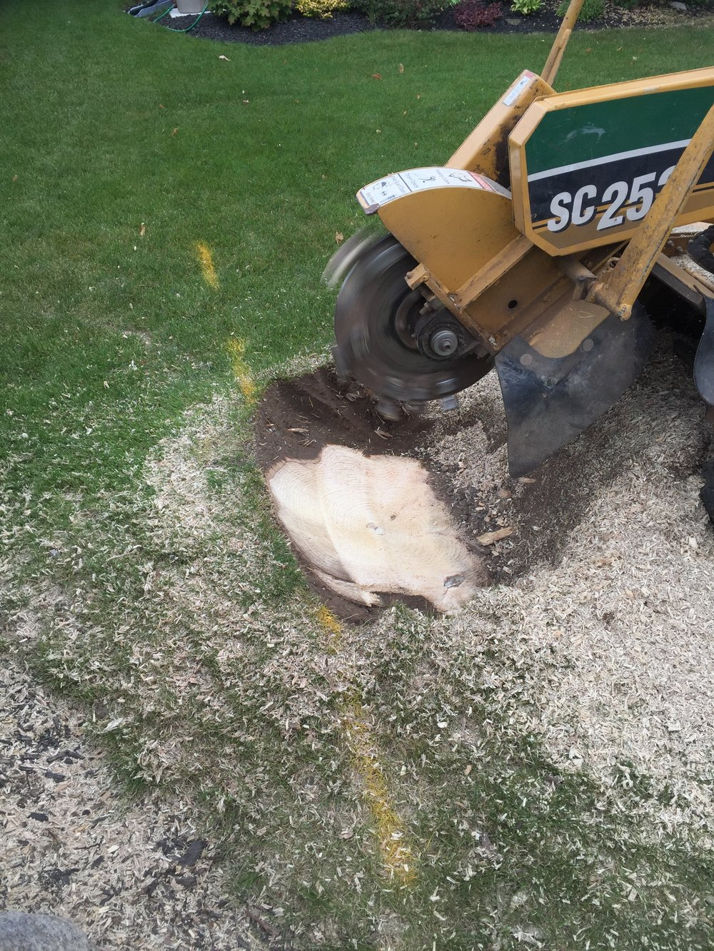 Stump Grinding Wasaga Beach
