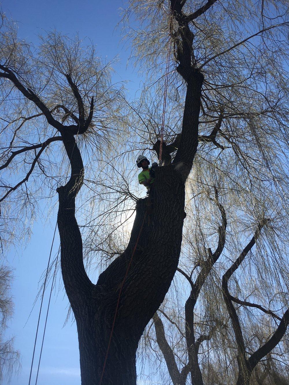 Tree Pruning Innisfil